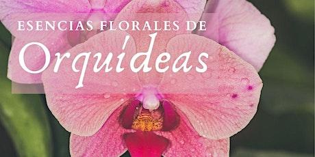 Esencias de Orquídeas Colombianas entradas