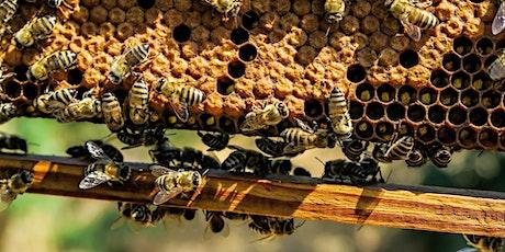 Visite guidée des ruches des Terres d'Ici tickets