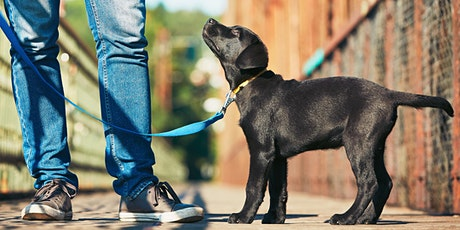 Puppy Training  Classes      5  Week Course tickets