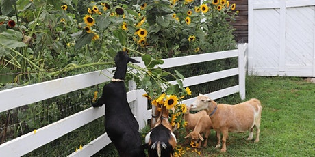 Donation Yoga at Sunflower Farm for Maine Music tickets