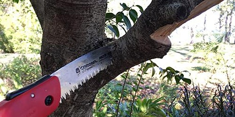 Pruning Trees -   Thursday, October 1st at  11:00am (English) tickets