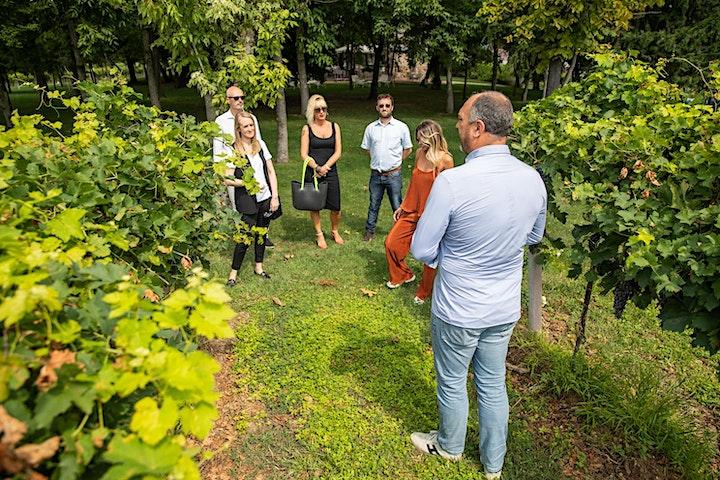 Immagine Visita in Cantina e Degustazione Vini Gardesani a Lazise