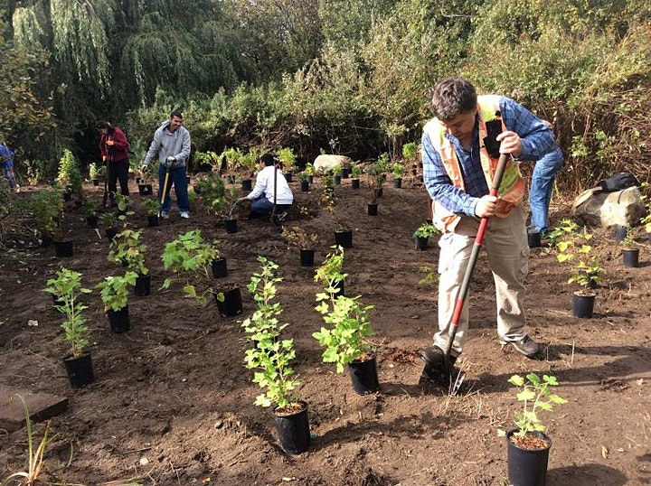 Trout Lake Planting Event image