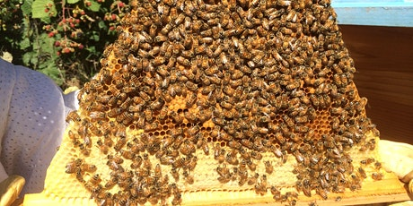 How are the Bees Doing? The Inner Workings of a Honey Bee Colony, Sept. 26 tickets