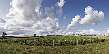 Vineyard tour and wine tasting @ Walton Brook Vineyard Leicestershire tickets
