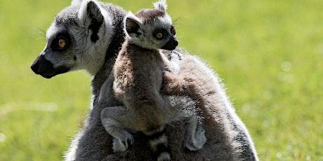 Festival of Lemurs tickets