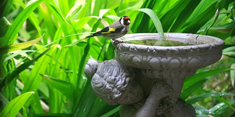 Becky's Birds - An Afternoon of Mindfulness & Learning tickets