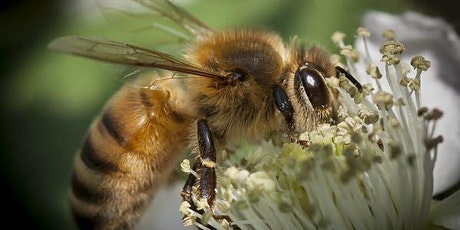 Learn about Bees @ Scottsdale Library tickets