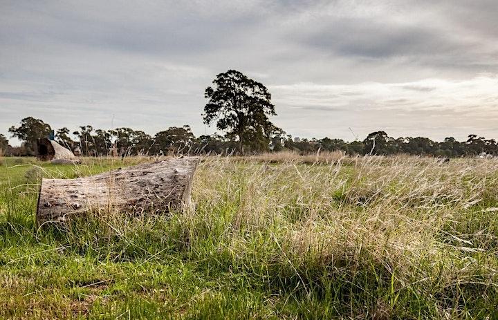Grasslands Pop-up Trail image