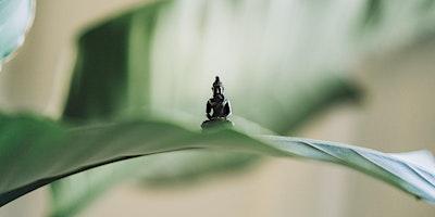 Yin+Yoga