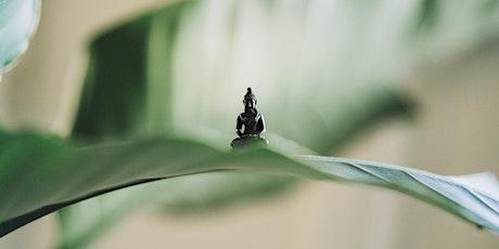 Méditation Taoïste billets