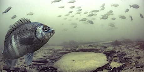 Underwater Photography for Science and Conservation tickets