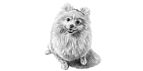 60min Animal Sketching - Pomeranian Dog (Ages 6+) tickets