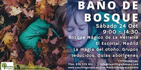 Baño de Bosque sábado 24 Oct - Otoño Bosque La Herrería El Escorial entradas