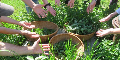 Herbal Skills Immersion: Skin & Wound Care tickets