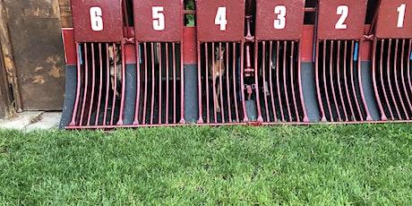 Junghund Training Rennbahn Tickets