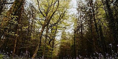 Gweithdy y Rhaglen Fforestydd Cenedlaethol/National Forest Prog. Workshop tickets