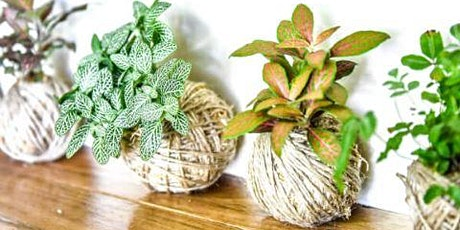 Plants'n'Pinot™ - Kokedama Class with Pimms in Milton tickets