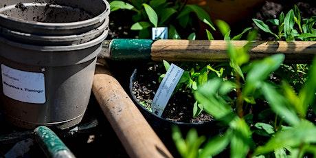 Reducing Plastics in the Garden Course / Cwrs Lleihau Plastigion yn yr Ardd tickets