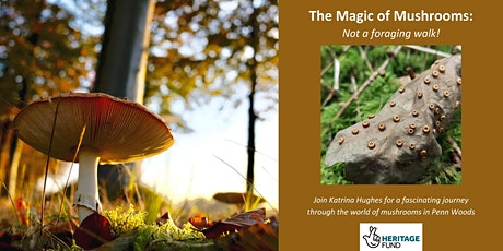 The Magical world of Mushrooms tickets