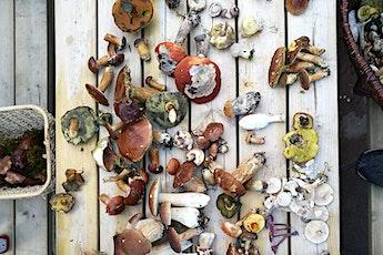 Buckinghamshire Wild Fungi Foray in Jordans tickets