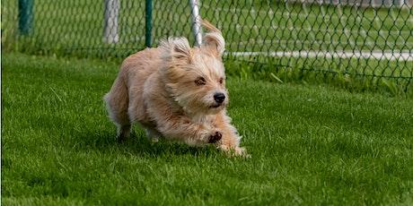 Jeder-Hund-Rennen Tickets