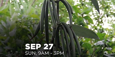 Alam Vanilla?   Vanilla Planting and Curing Webinar via Zoom tickets