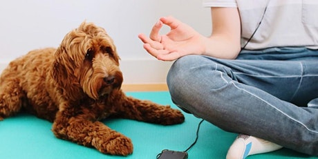 Petminded Presents Meditation With Your Dog with Sama Dog Wellbeing tickets