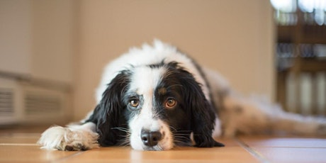 Petminded Presents What Pet Owners Need to Know About DCM tickets