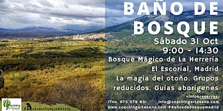 Baño de Bosque sábado 31 Oct - Otoño Bosque La Herrería El Escorial entradas
