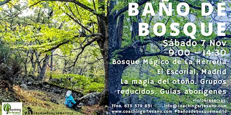 Baño de Bosque sábado 7 Nov - Otoño Bosque La Herrería El Escorial entradas
