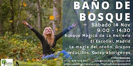 Baño de Bosque sábado 14 Nov - Otoño Bosque La Herrería El Escorial entradas