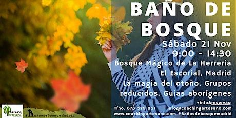 Bosque sábado 21 Nov - Otoño Bosque La Herrería El Escorial entradas