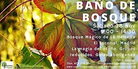 Baño de Bosque sábado 28 Nov - Otoño Bosque La Herrería El Escorial entradas