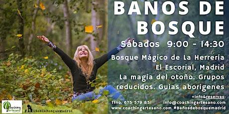 Baño de Bosque sábado  5 Dic - Otoño Bosque La Herrería El Escorial entradas