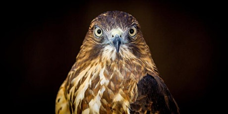 Raptor and Falconry Photography Workshop tickets
