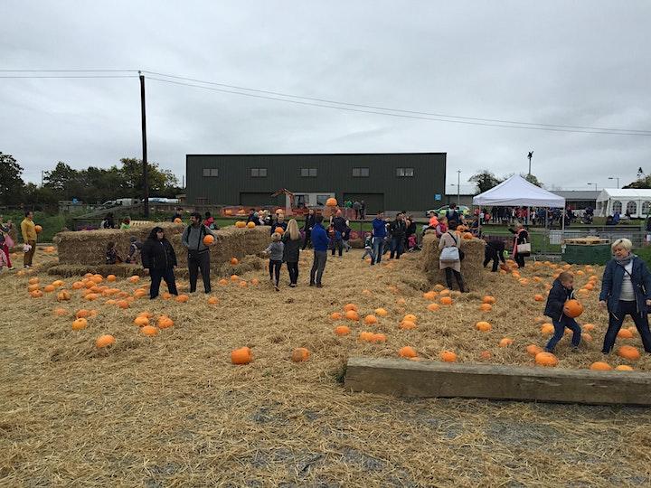 Pumpkin Picking and Play image