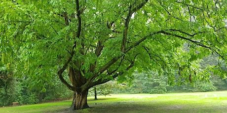 Bomenwandeling in het Amstelpark, Amsterdam tickets