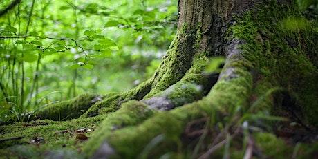 Webinar: Successful Stewardship Components of Healthy Ecosystems tickets