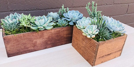 DIY Succulent Centerpiece Workshop - Sweet Digs tickets