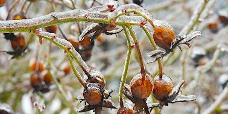 Fall and Winter Gardening for Wildlife Webinar tickets