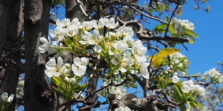 Orchard Blossoms at Core Cider tickets