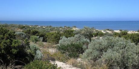 Exploring Wara Wayingga Tennyson Dunes - discover more than meets the eye tickets