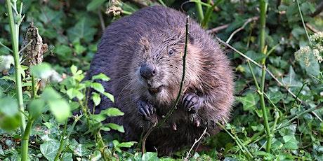 Return of the Beaver Webinar tickets