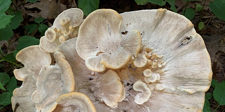 An Introduction to Mushrooms and Fungi tickets