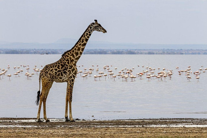 "Immagine ""AFRICA, Immagini e racconti da una terra magica"" - SIMONE DEGL'INNOCENTI"
