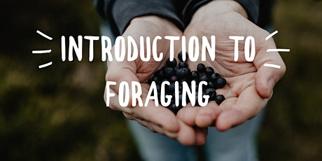 Introduction to Foraging tickets