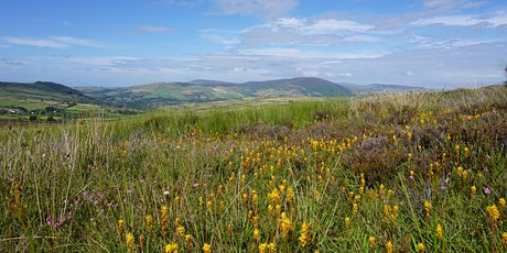 Rescheduled guided walk in the Southern Uplands tickets