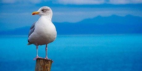 Gull Behaviour Citizen Science - Follow Up tickets