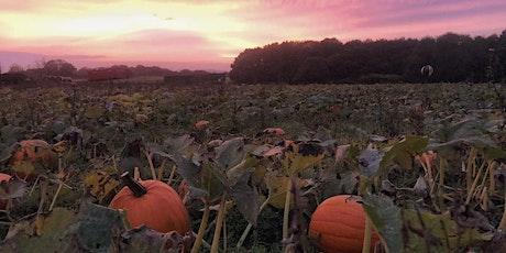 Saturday 24th October, Pumpkin Picking at East Grange tickets